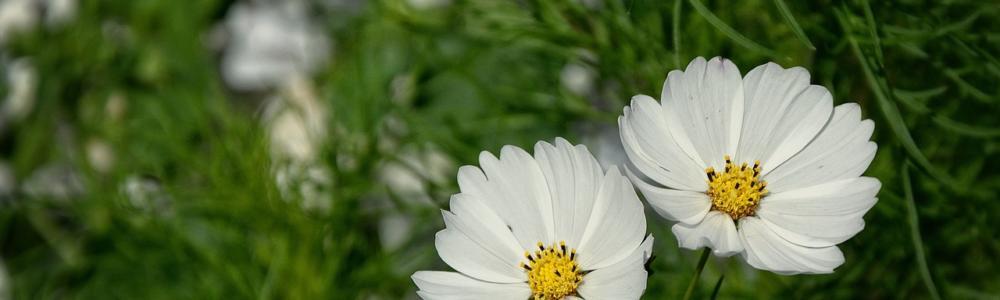 beauty-1526670_1280